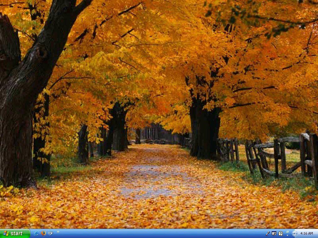autumn-beauty-trees-leaves-beauty