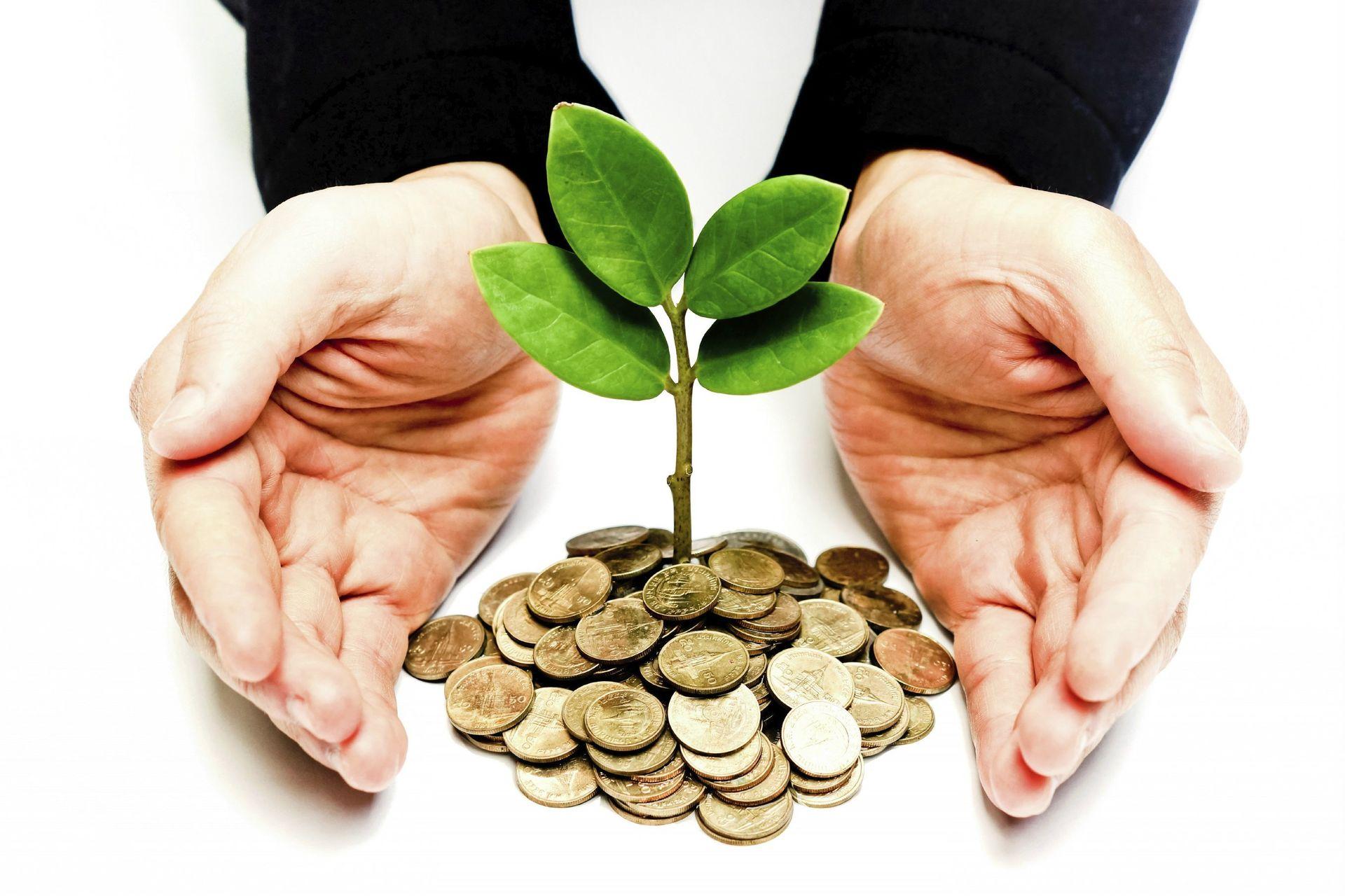 money-tree-money