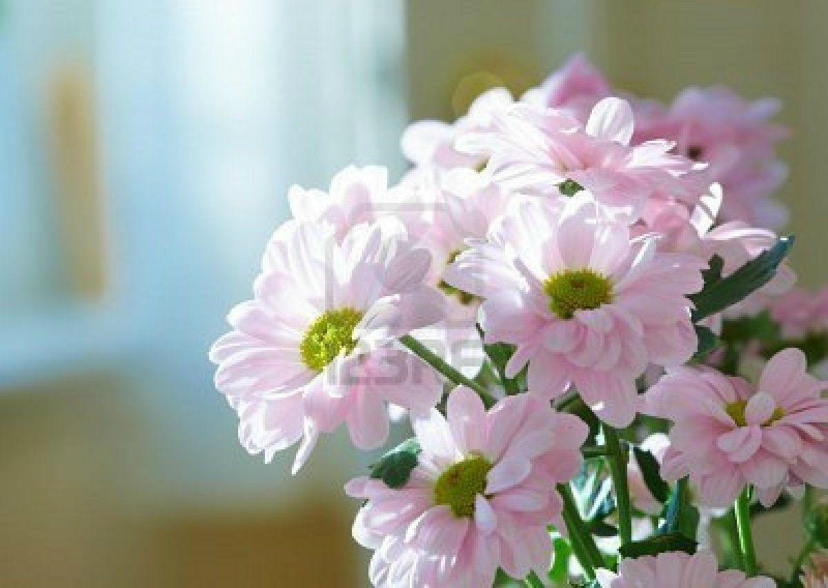 beauty+nature+flower+(1)-beauty
